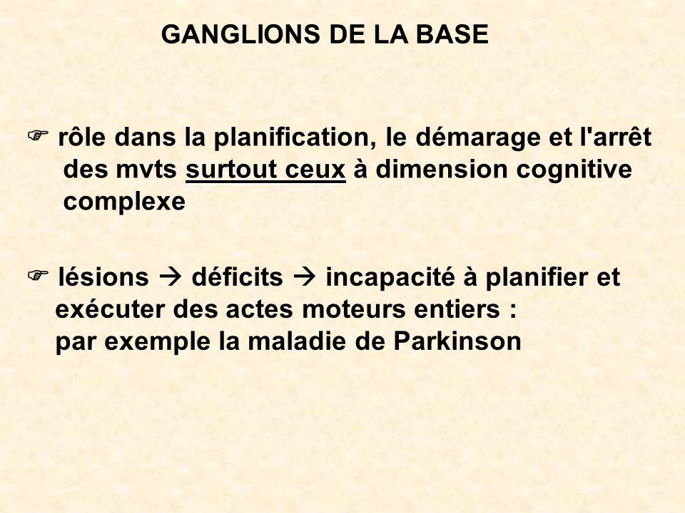 GANGLIONS DE LA BASE F rôle dans la planification, le démarage et l arrêt. des mvts surtout ceux à dimension cognitive.