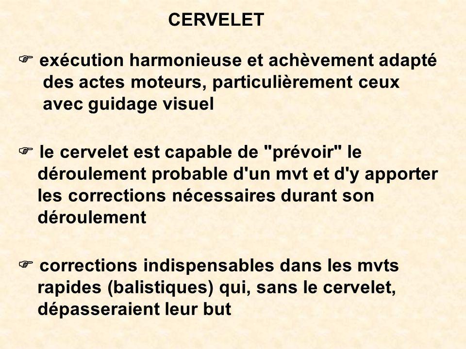 CERVELET F exécution harmonieuse et achèvement adapté. des actes moteurs, particulièrement ceux. avec guidage visuel.