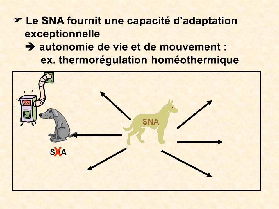 X F Le SNA fournit une capacité d adaptation exceptionnelle