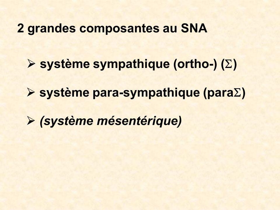 2 grandes composantes au SNA