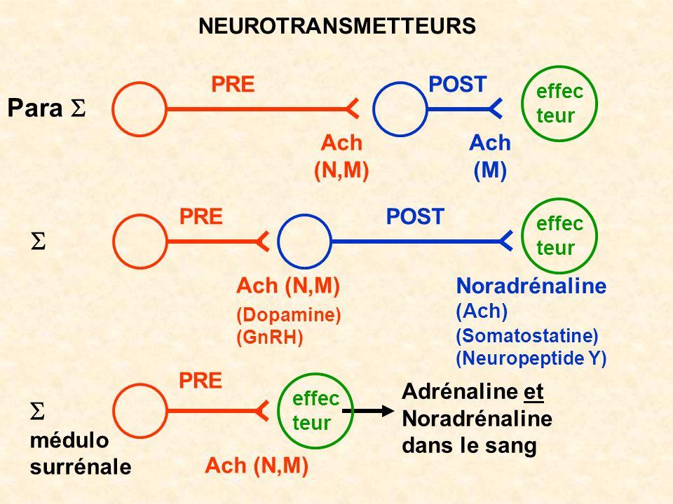 Para S S S NEUROTRANSMETTEURS PRE POST Ach (N,M) Ach (M) PRE POST