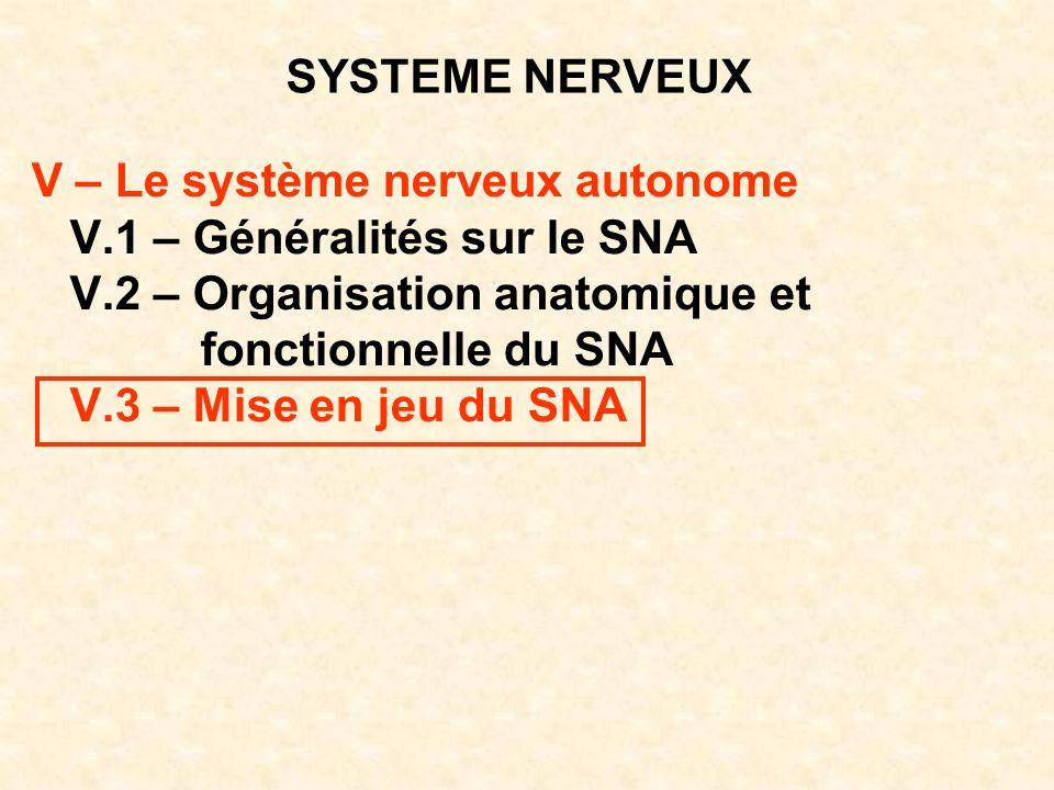SYSTEME NERVEUX V – Le système nerveux autonome. V.1 – Généralités sur le SNA. V.2 – Organisation anatomique et.