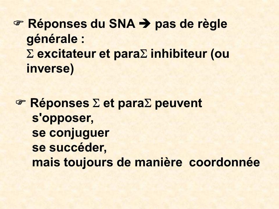 F Réponses du SNA  pas de règle