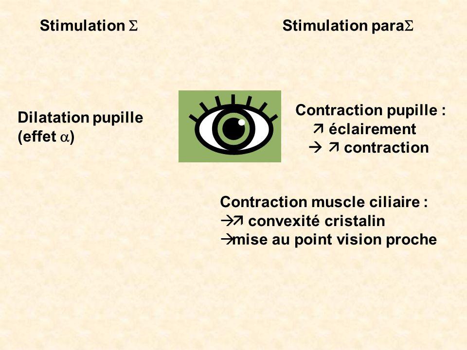 Stimulation S Stimulation paraS. Contraction pupille :  éclairement.   contraction. Dilatation pupille.