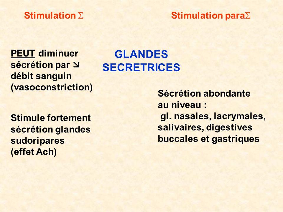 GLANDES SECRETRICES Stimulation S Stimulation paraS