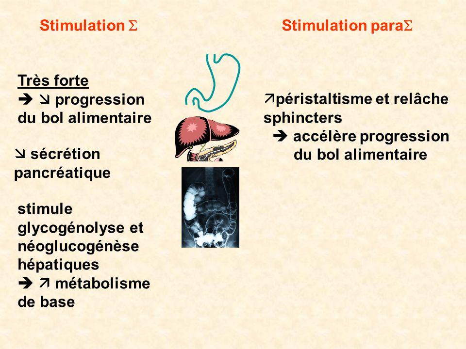 Stimulation S Stimulation paraS. Très forte.   progression du bol alimentaire. péristaltisme et relâche sphincters.