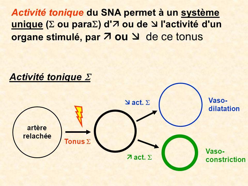 Activité tonique du SNA permet à un système