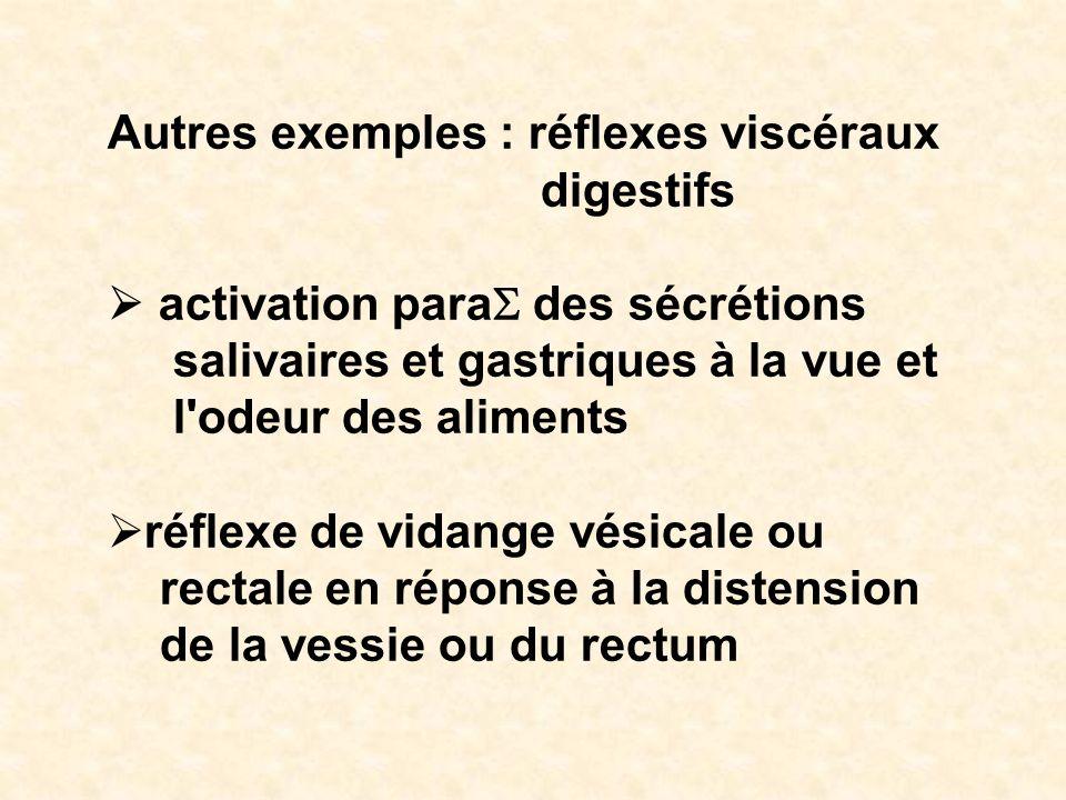 Autres exemples : réflexes viscéraux