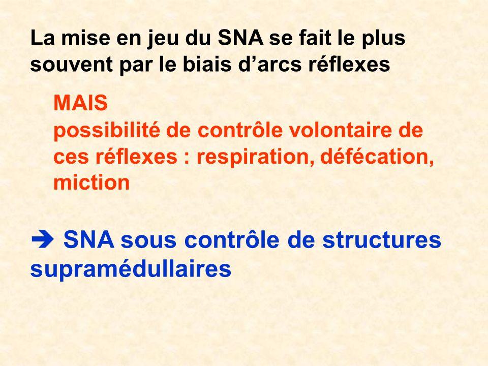  SNA sous contrôle de structures supramédullaires