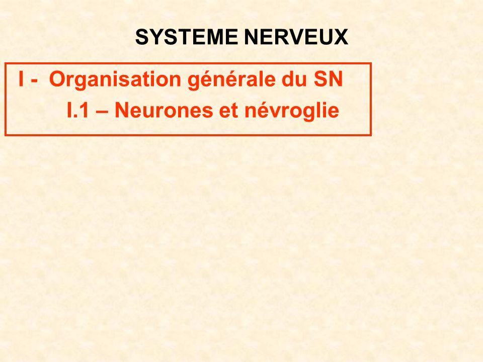 I - Organisation générale du SN I.1 – Neurones et névroglie
