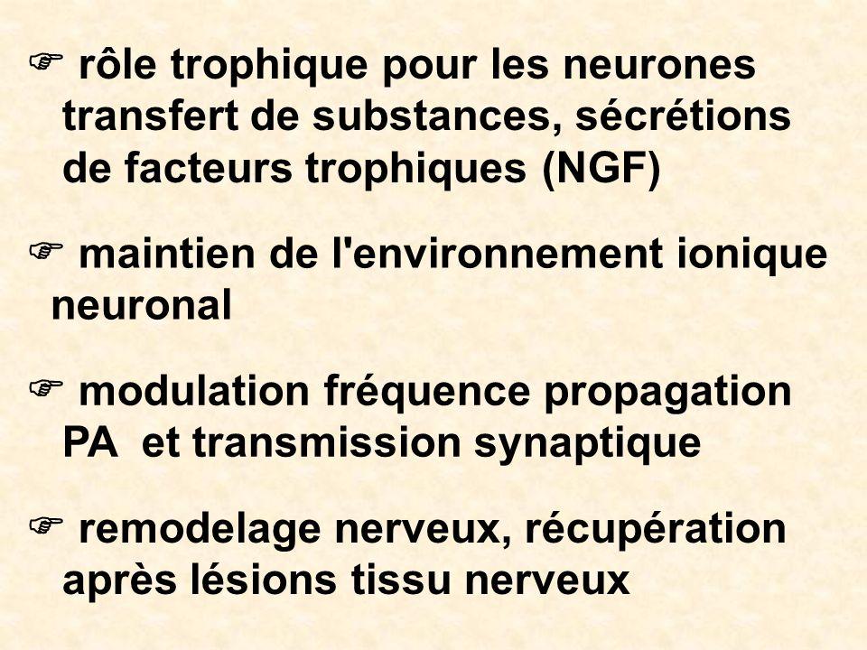 F rôle trophique pour les neurones