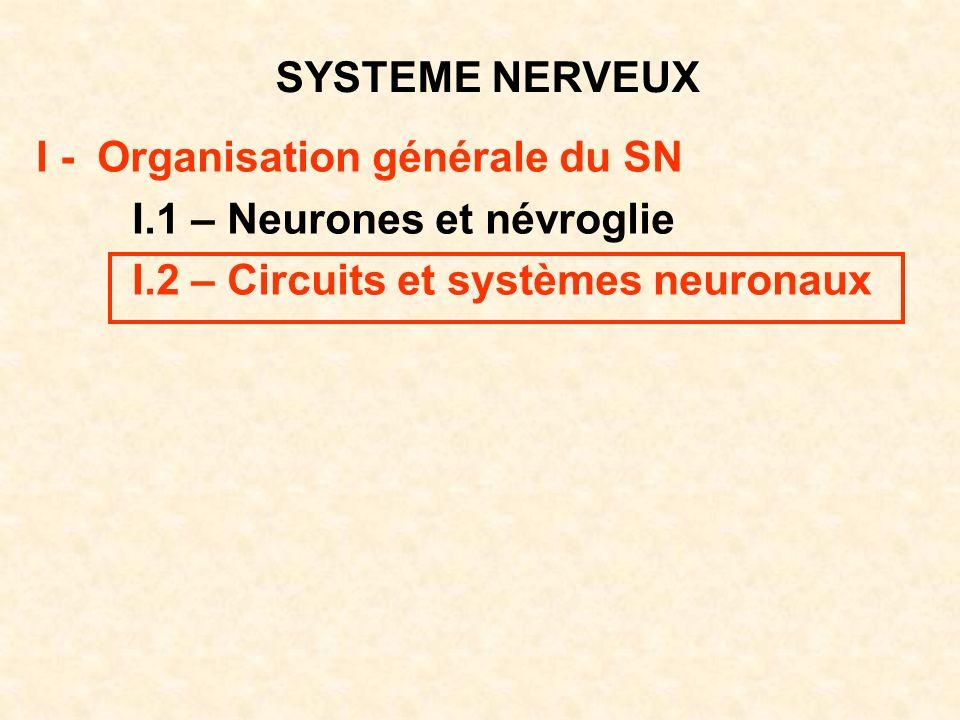 SYSTEME NERVEUX I - Organisation générale du SN. I.1 – Neurones et névroglie.