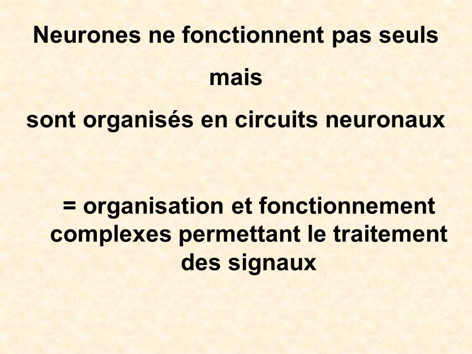 Neurones ne fonctionnent pas seuls mais
