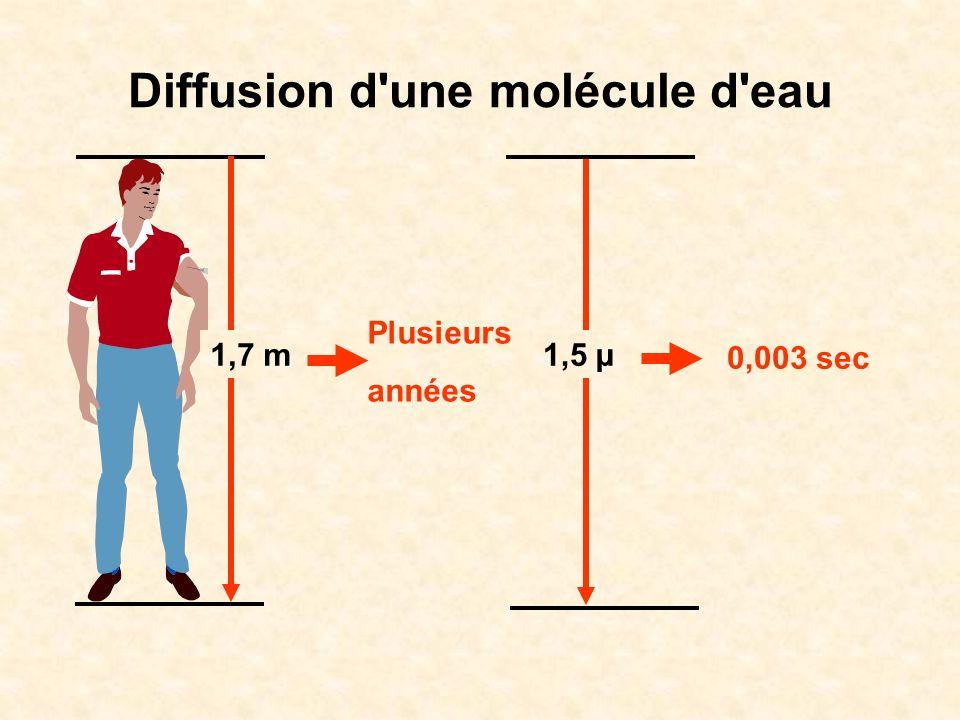 Diffusion d une molécule d eau