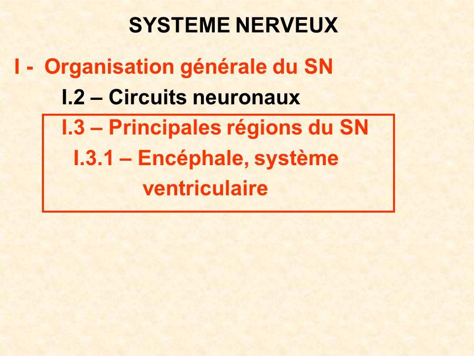 SYSTEME NERVEUX I - Organisation générale du SN. I.2 – Circuits neuronaux. I.3 – Principales régions du SN.