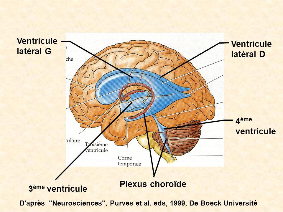 Ventricule latéral G Ventricule latéral D 4ème ventricule