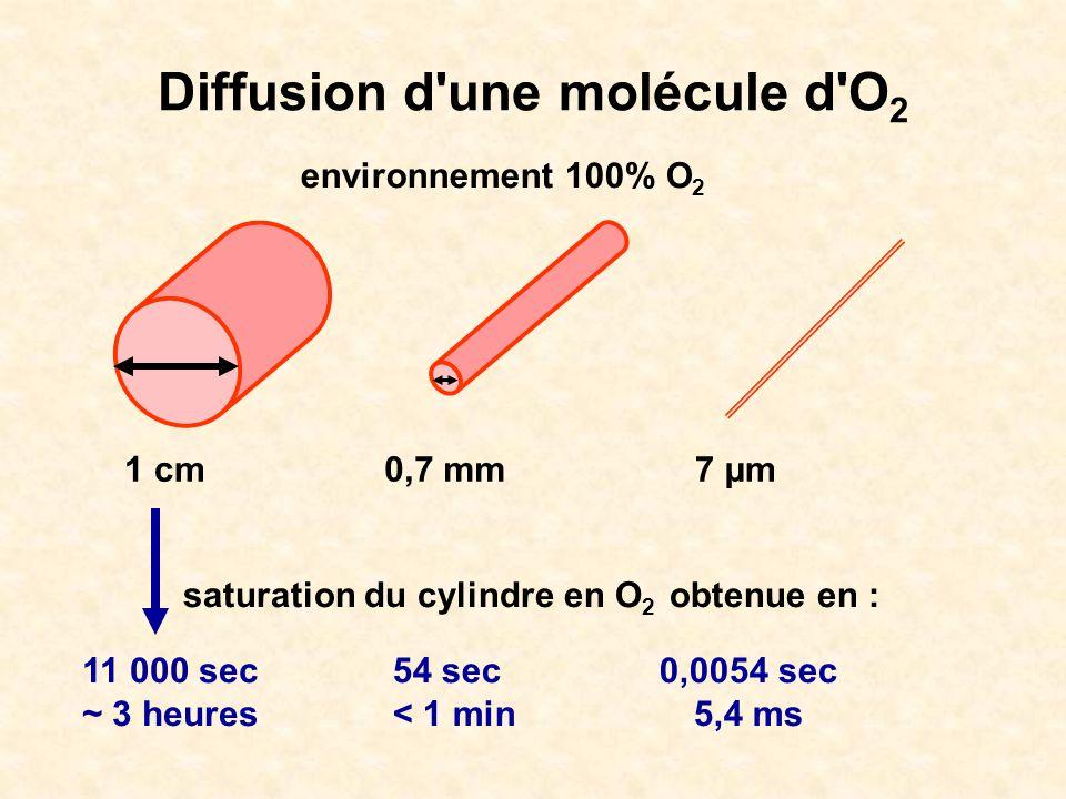 Diffusion d une molécule d O2