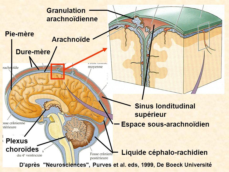 Granulation arachnoïdienne