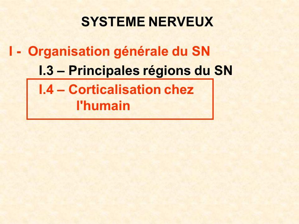 SYSTEME NERVEUX I - Organisation générale du SN. I.3 – Principales régions du SN. I.4 – Corticalisation chez.