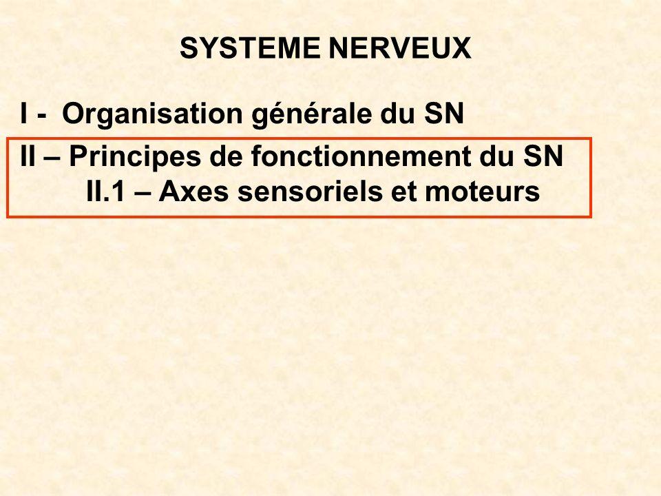 SYSTEME NERVEUX I - Organisation générale du SN. II – Principes de fonctionnement du SN.