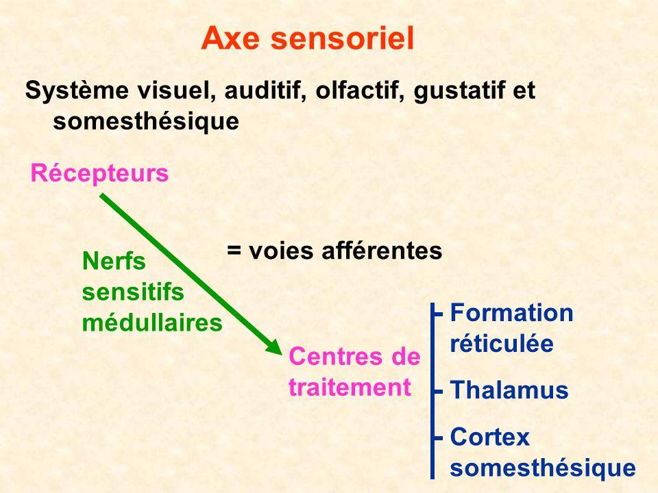 Axe sensoriel Système visuel, auditif, olfactif, gustatif et