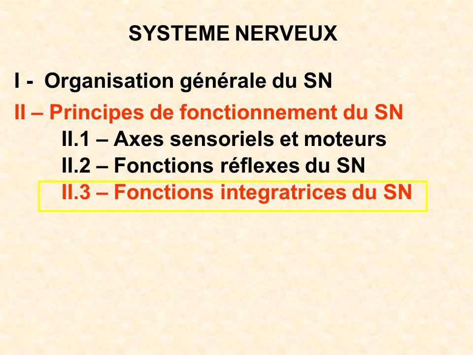 SYSTEME NERVEUX I - Organisation générale du SN. II – Principes de fonctionnement du SN. II.1 – Axes sensoriels et moteurs.