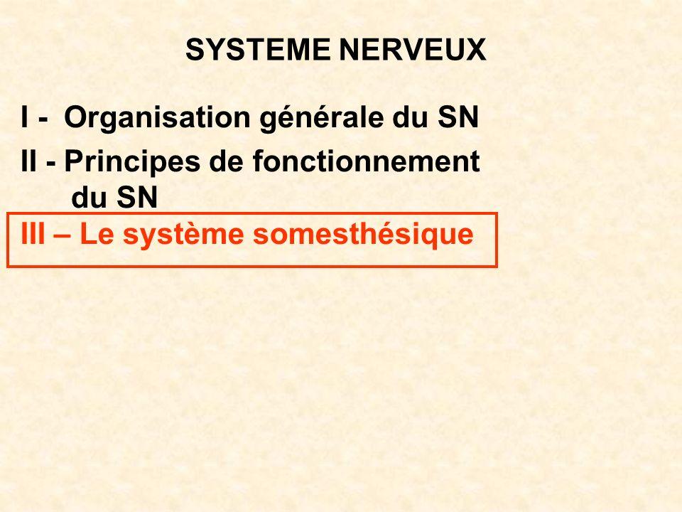 SYSTEME NERVEUX I - Organisation générale du SN. II - Principes de fonctionnement.