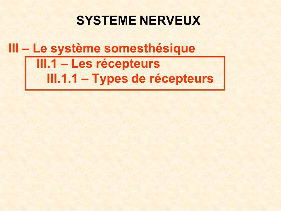 SYSTEME NERVEUX III – Le système somesthésique III.1 – Les récepteurs III.1.1 – Types de récepteurs