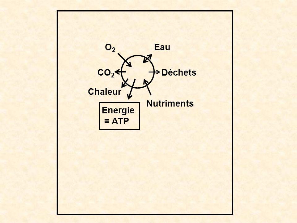 O2 CO2 Chaleur Energie = ATP Nutriments Déchets Eau
