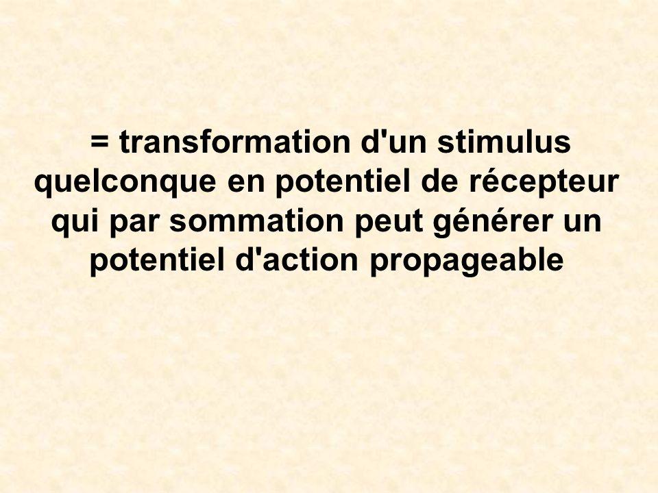 = transformation d un stimulus quelconque en potentiel de récepteur qui par sommation peut générer un potentiel d action propageable