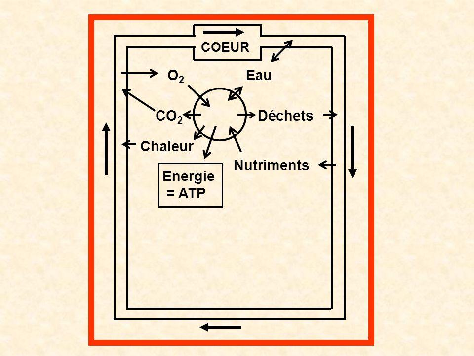 O2 CO2 Chaleur Energie = ATP Nutriments Déchets Eau COEUR