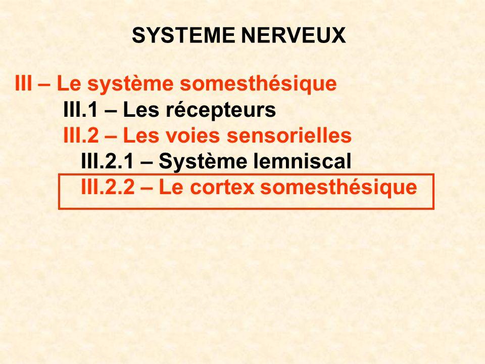 SYSTEME NERVEUX III – Le système somesthésique. III.1 – Les récepteurs. III.2 – Les voies sensorielles.