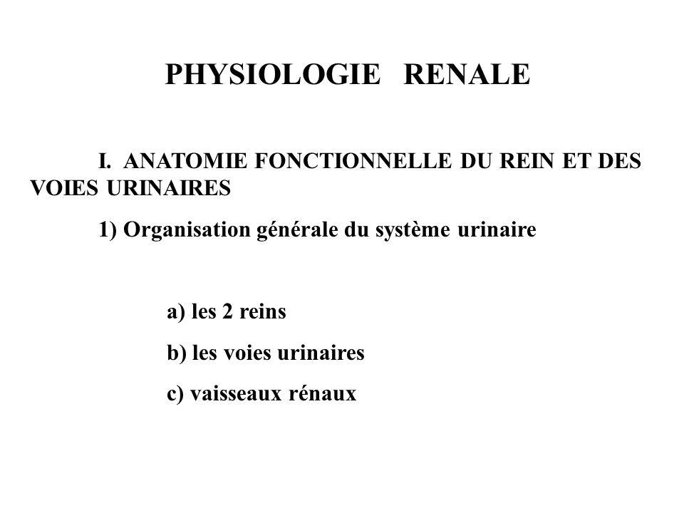 PHYSIOLOGIE RENALE I. ANATOMIE FONCTIONNELLE DU REIN ET DES VOIES URINAIRES. 1) Organisation générale du système urinaire.