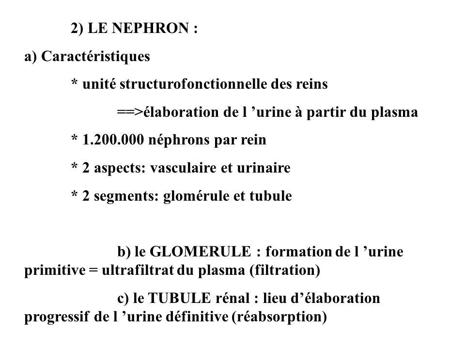 2) LE NEPHRON : a) Caractéristiques. * unité structurofonctionnelle des reins. ==>élaboration de l 'urine à partir du plasma.