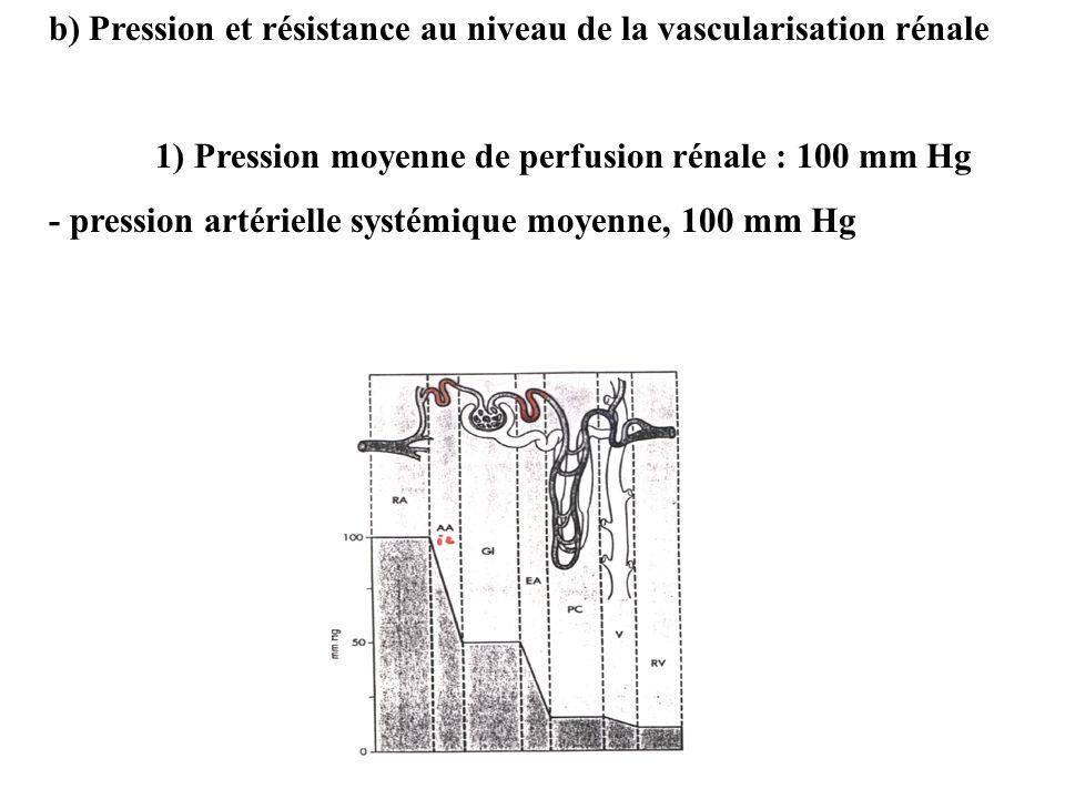 b) Pression et résistance au niveau de la vascularisation rénale