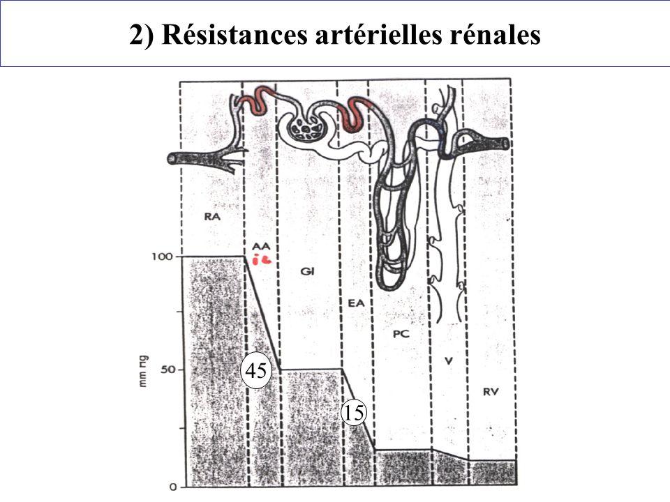 2) Résistances artérielles rénales