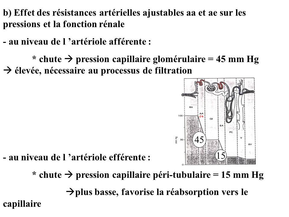 b) Effet des résistances artérielles ajustables aa et ae sur les pressions et la fonction rénale