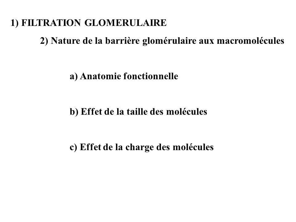 1) FILTRATION GLOMERULAIRE