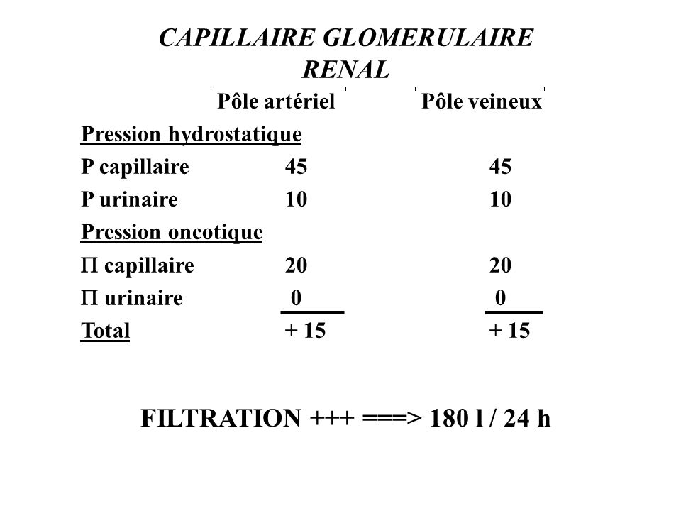CAPILLAIRE GLOMERULAIRE RENAL FILTRATION +++ ===> 180 l / 24 h
