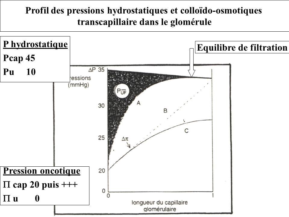 Profil des pressions hydrostatiques et colloïdo-osmotiques