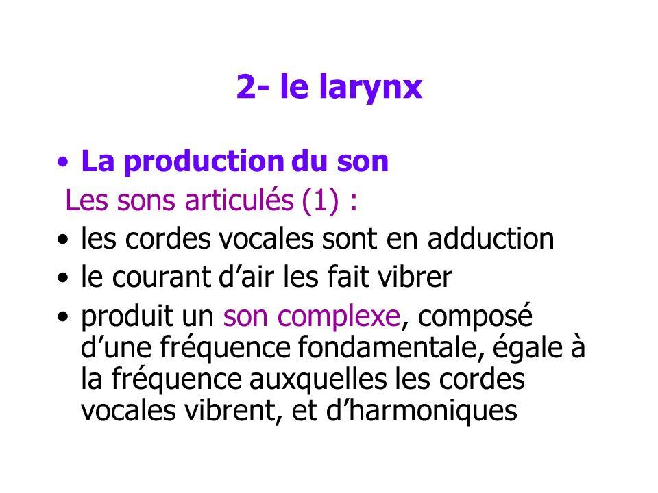 2- le larynx La production du son Les sons articulés (1) :