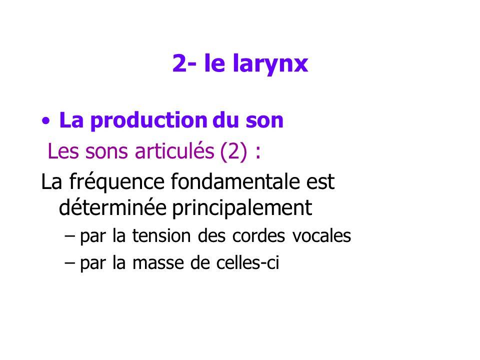 2- le larynx La production du son Les sons articulés (2) :