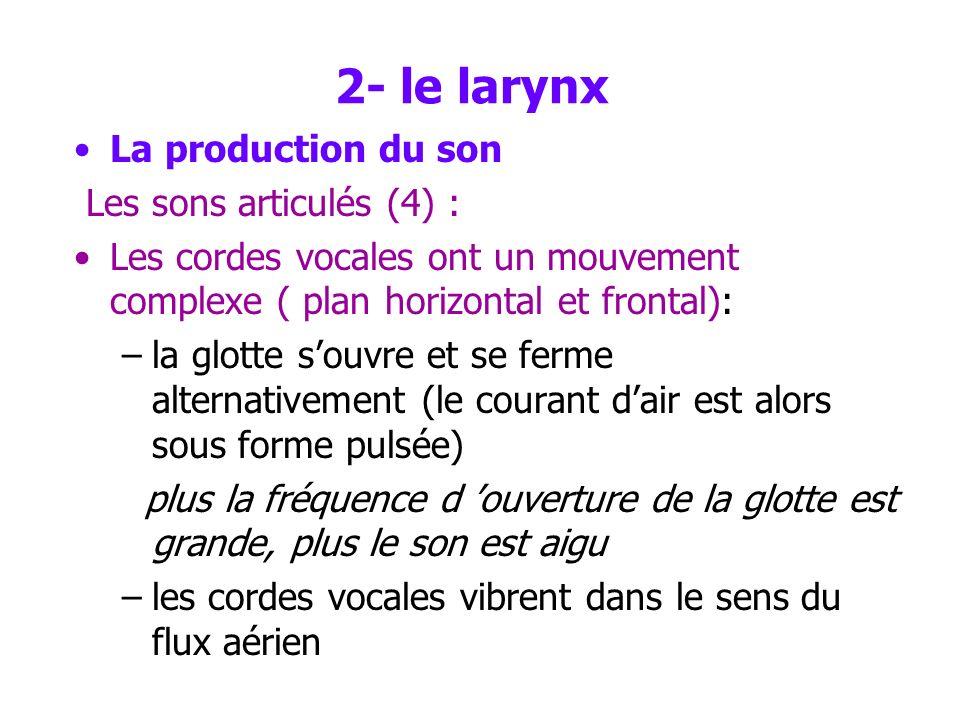 2- le larynx La production du son Les sons articulés (4) :