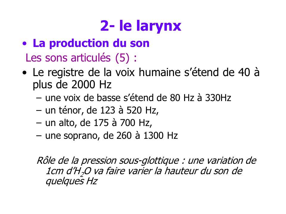 2- le larynx La production du son Les sons articulés (5) :