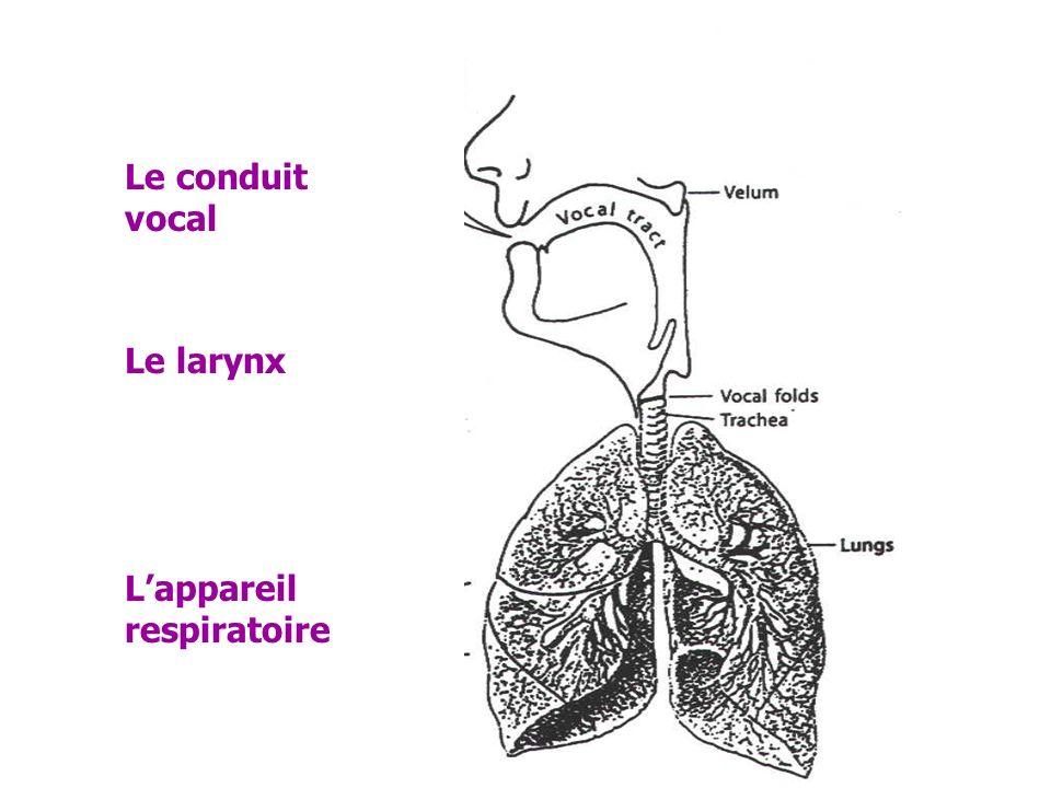 Le conduit vocal Le larynx L'appareil respiratoire