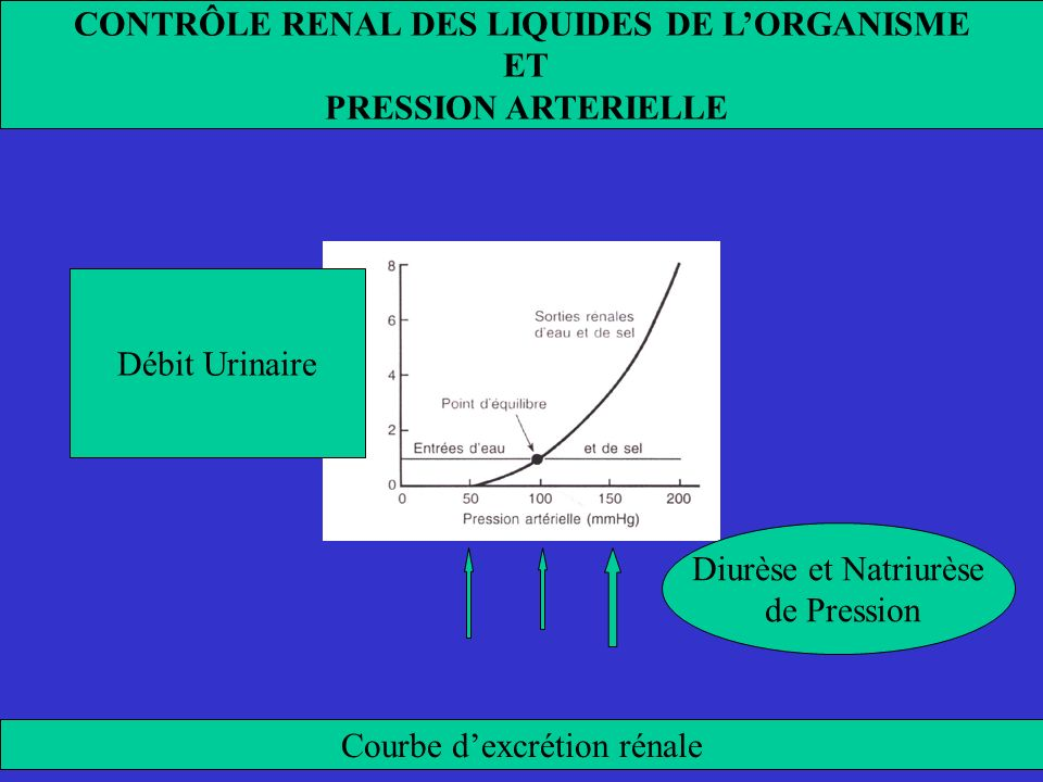 CONTRÔLE RENAL DES LIQUIDES DE L'ORGANISME