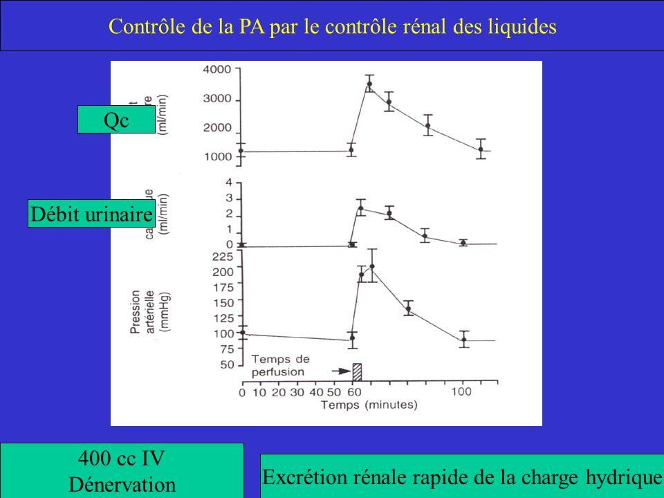 Contrôle de la PA par le contrôle rénal des liquides
