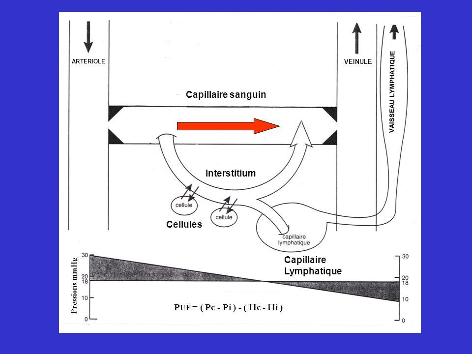 Capillaire Lymphatique