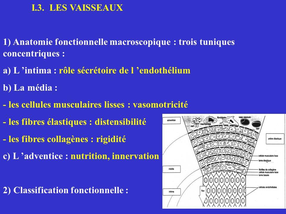 I.3. LES VAISSEAUX1) Anatomie fonctionnelle macroscopique : trois tuniques concentriques : a) L 'intima : rôle sécrétoire de l 'endothélium.