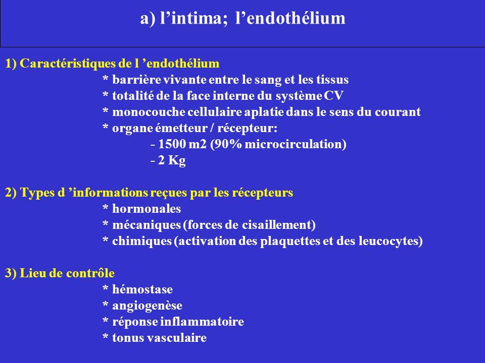 a) l'intima; l'endothélium
